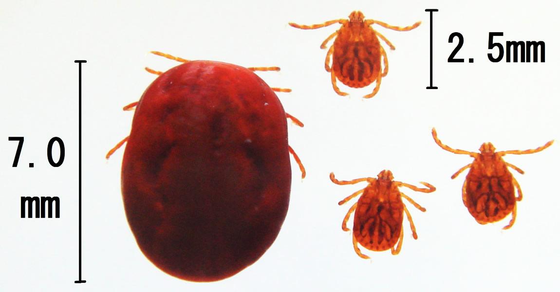 「マダニ」とはどんな虫?刺されると重症になる症例もあるとの事。