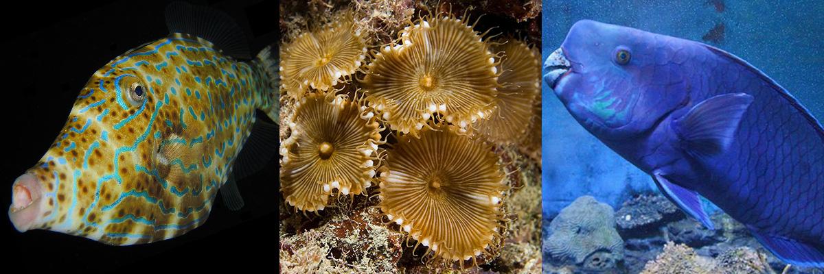 「パリトキシン」とはどういうもの?海洋生物に含まれる猛毒との事。