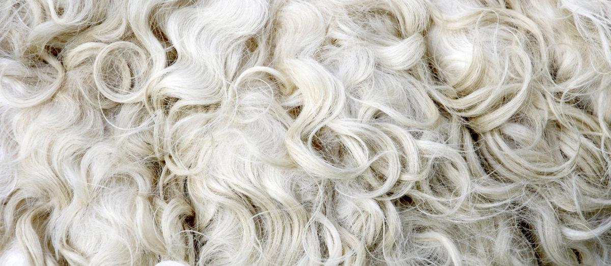 そもそも「カシミア」とはどういう意味?「カシミアヤギ」という「山羊(ヤギ)」の毛との事。