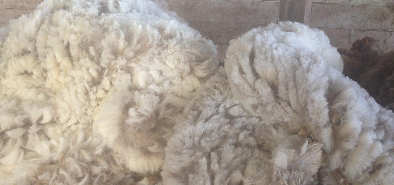 「メリノ」とはどういう意味?メリノ種と言われる羊からとれる高品質な羊毛との事。