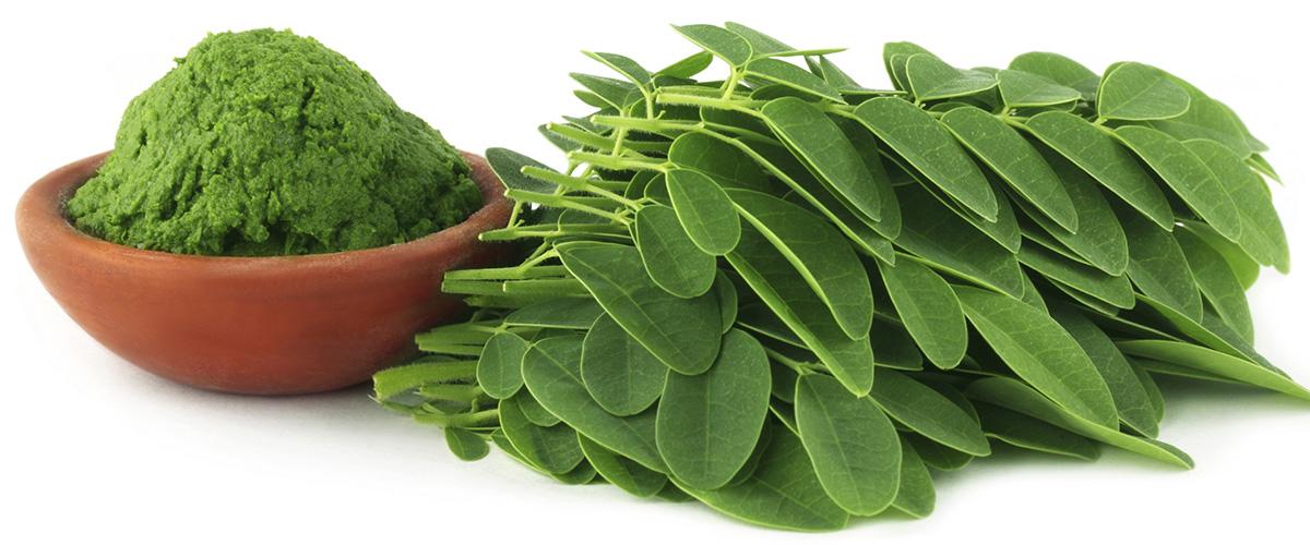 「モリンガ(Moringa)」とはどういう植物?日本では「ワサビノキ」と言われる植物との事。