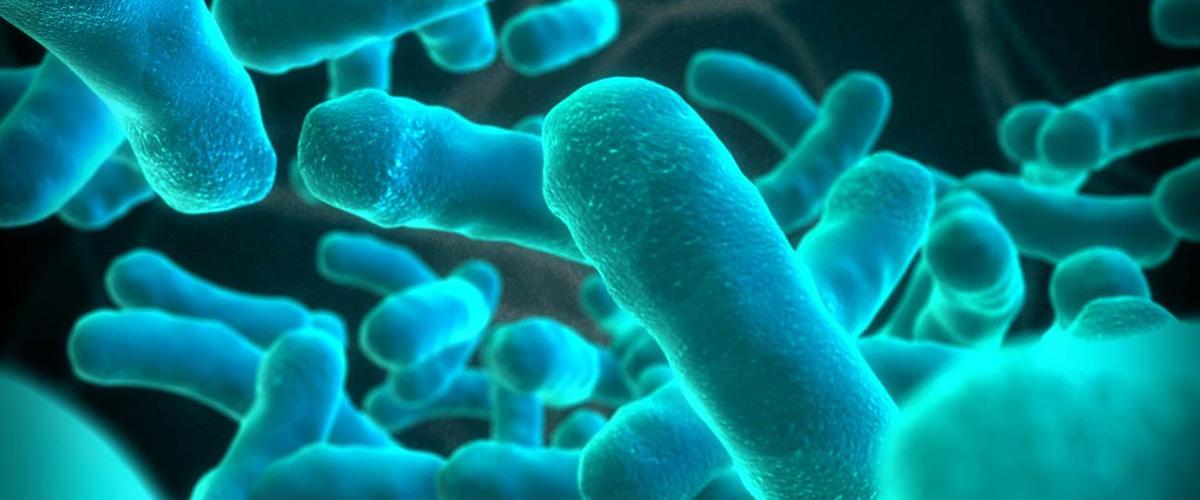 「リステリア」とはどういう意味?アルファベットで「Listeria」と記述するとの事。