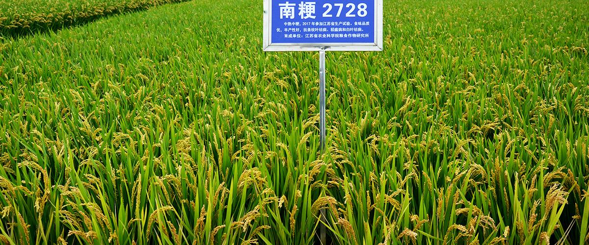 そもそも「うるち米」とはどんな米?また「うるち」とはどういう意味?漢字で「粳」と記述するとの事。