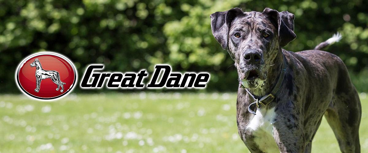 「グレートデン」とはどういう意味?英語で「Great Dane」と記述するとの事。