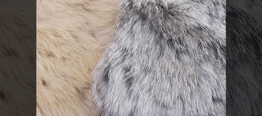 Rabbit-fur