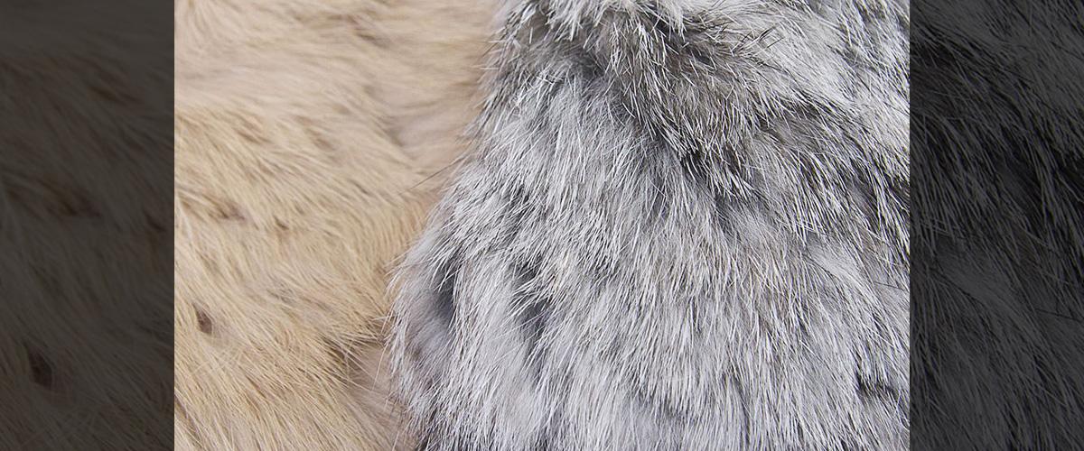 「ラビットファー」とはどういう意味?英語で「Rabbit fur」と記述するとの事。