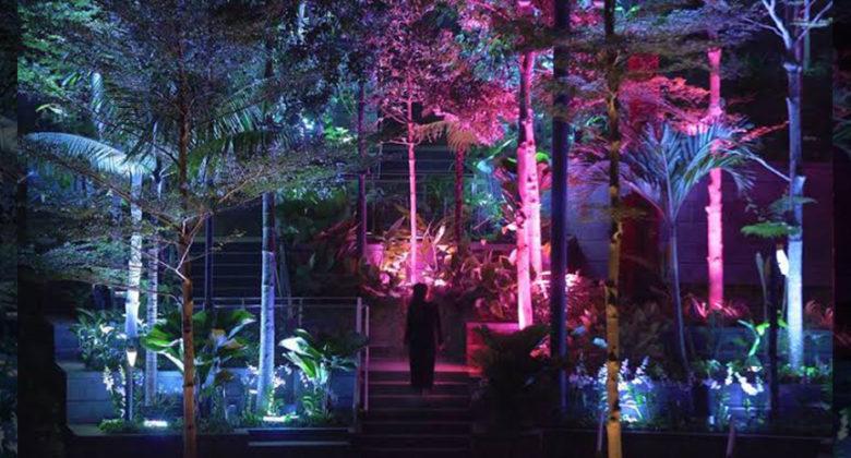 luminous-forest