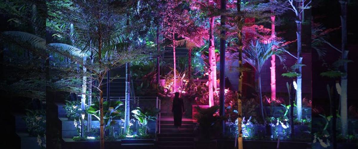 「ルミナスフォレスト」とはどういう意味?英語で「luminous forest」と記述するとの事。