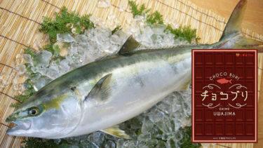 「チョコブリ」とはどういう意味?愛媛県産の養殖ブリの名称になるとの事。