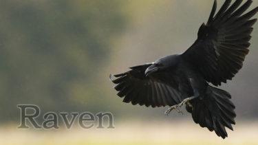 「レイブンプール」とはどういう意味?英語で「ravenpool」と記述するとの事。