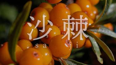 「サジー」とはどういう意味?アルファベットで「Saji」、漢字では「沙棘」と記述するとの事。